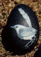 Blue wren  by Ngarnamurrah