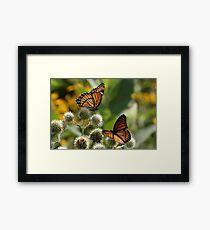 2 Viceroy Butterflies Framed Print