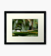 Water drop nature Framed Print