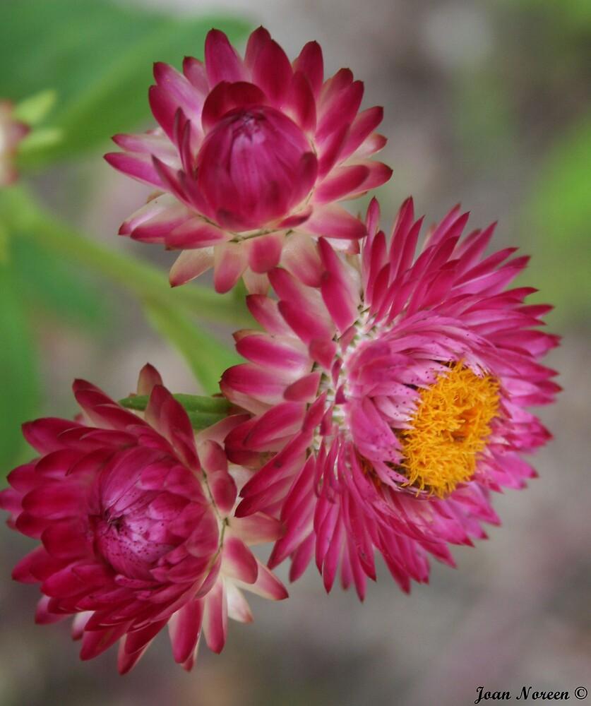 Wildflower by starstaxi