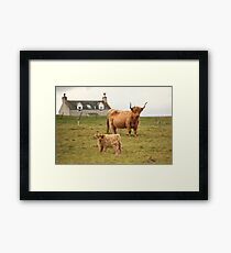 Highland cow and calf Scotland Framed Print