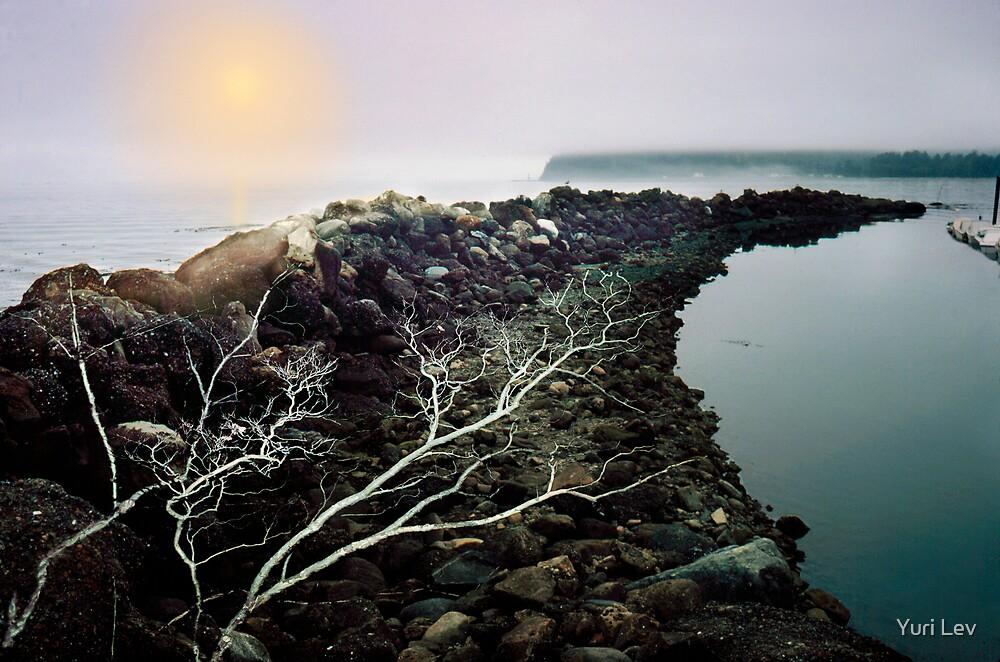 Neah Bay by Yuri Lev