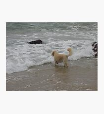 Who is that doggy by the Seaside? Photographic Print
