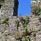 Conwy Castle, Part Of The Outer Wall by lezvee