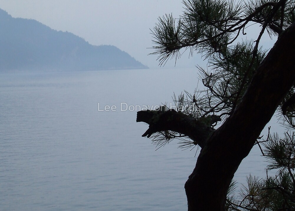 Windswept Pine by Lee Donavon Hardy