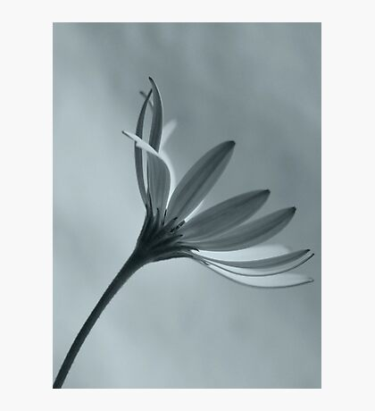 Faded Beauty Photographic Print