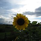Sunflower 2 by AcePhotography