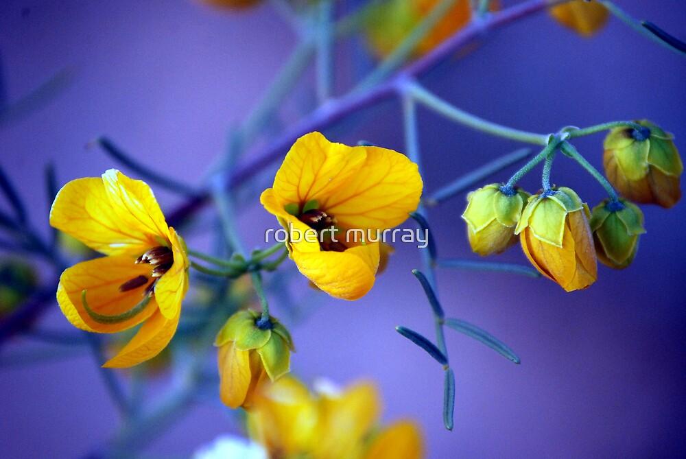 Cassia #2 Native flower series by robert murray