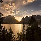 Golden Jenny Lake View by Bo Insogna