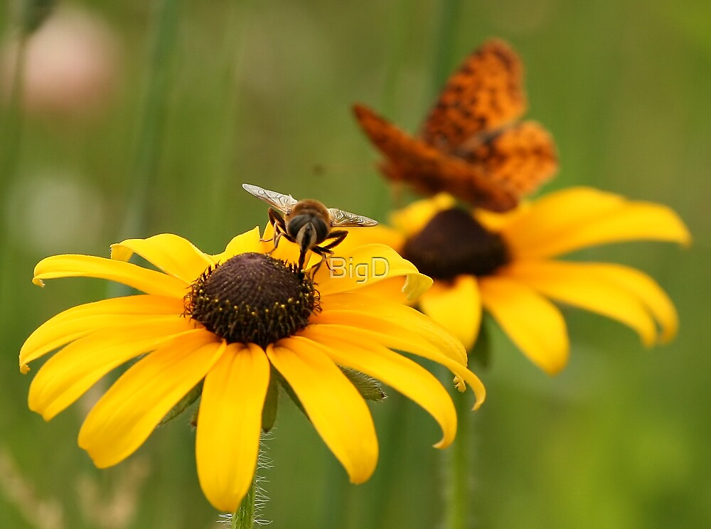Bee and Butterfly by BigD