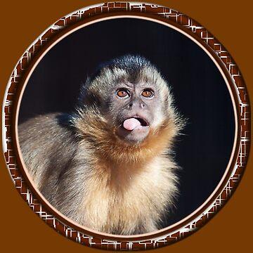 monkey by RusticShiraz