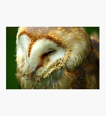 Barn Owl -3 Photographic Print
