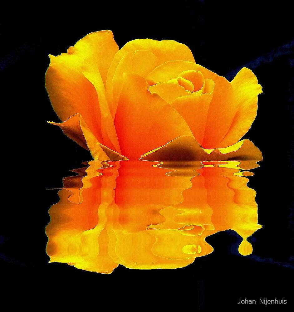 YELLOW ROSE REFLECTION by Johan  Nijenhuis