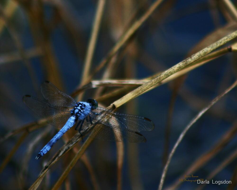 Blue Dragonfly by Darla  Logsdon