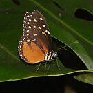 On a leaf by dragonsnare