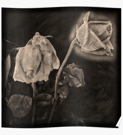 Portrait of a Dying Rose Poster