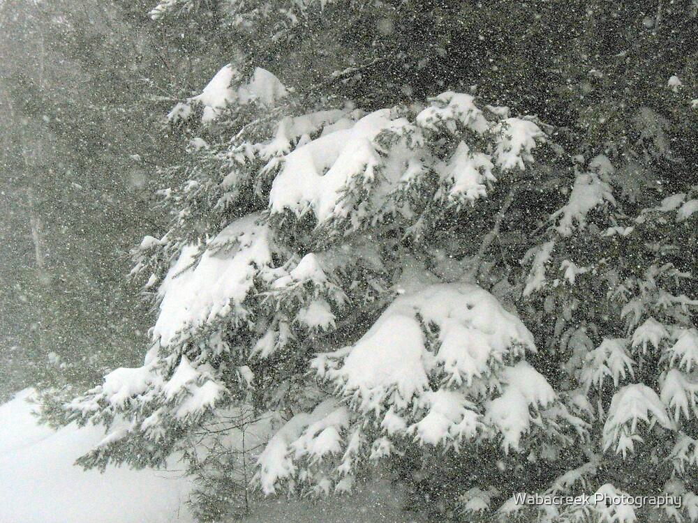 Winter Scene by Jocelyne Phillips
