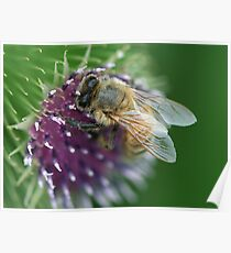 Thistle Bee Poster