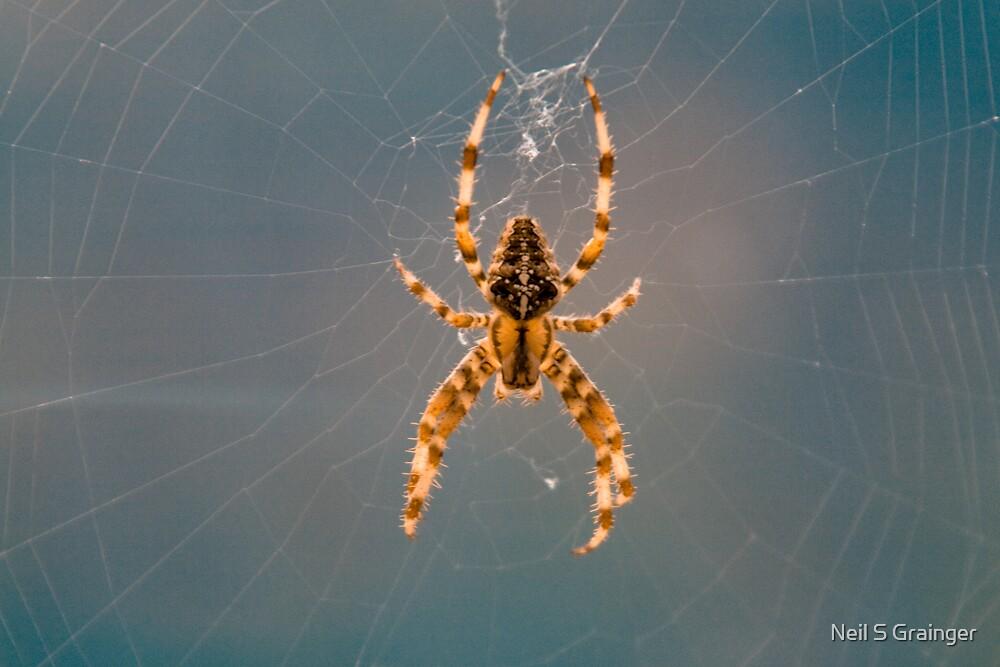 Garden Spider by Neil Grainger