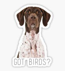 german shorthaired pointer got birds? Sticker