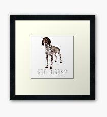 german shorthaired pointer got birds? Framed Print