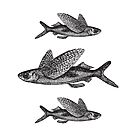 Flying Fish   Vintage Fish   Three Fish   Black and White    by EclecticAtHeART