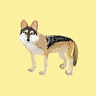 Mexican wolf by belettelepink