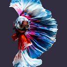 Magnificent Betta Splendens Freshwater Fish by taiche
