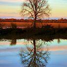 Autumn Sunset by Barbara  Brown