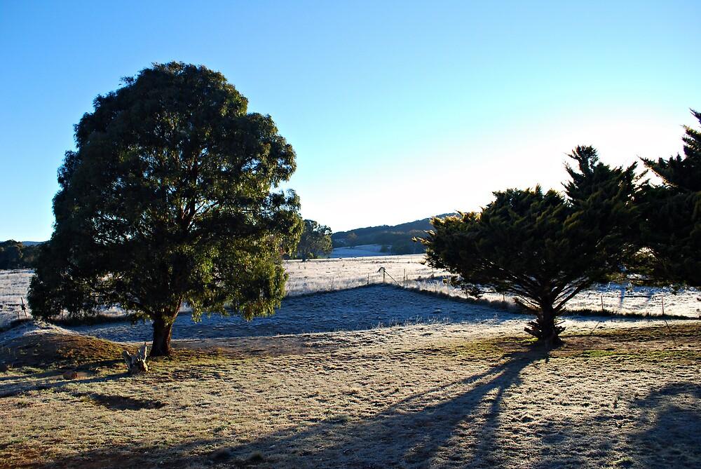 Frosty Goulburn Morning by Peta Jade
