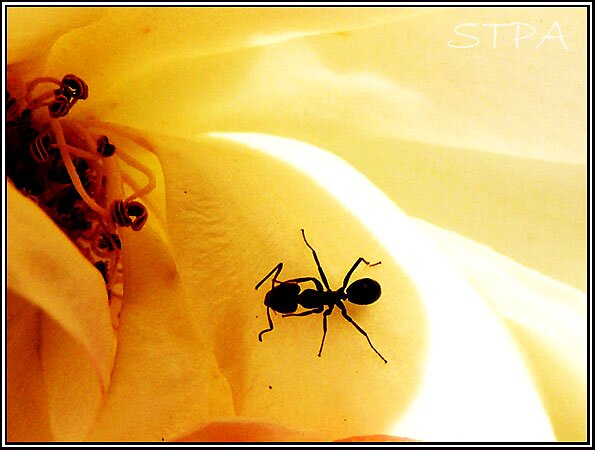 the ants go marching by SCREAM THE PAIN AWAY Photography.