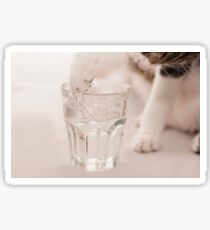 Curious cat uses paw to drink water from a glass Sticker