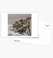 Birds Postcards