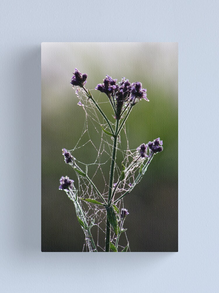 Alternate view of Morning Lace Canvas Print