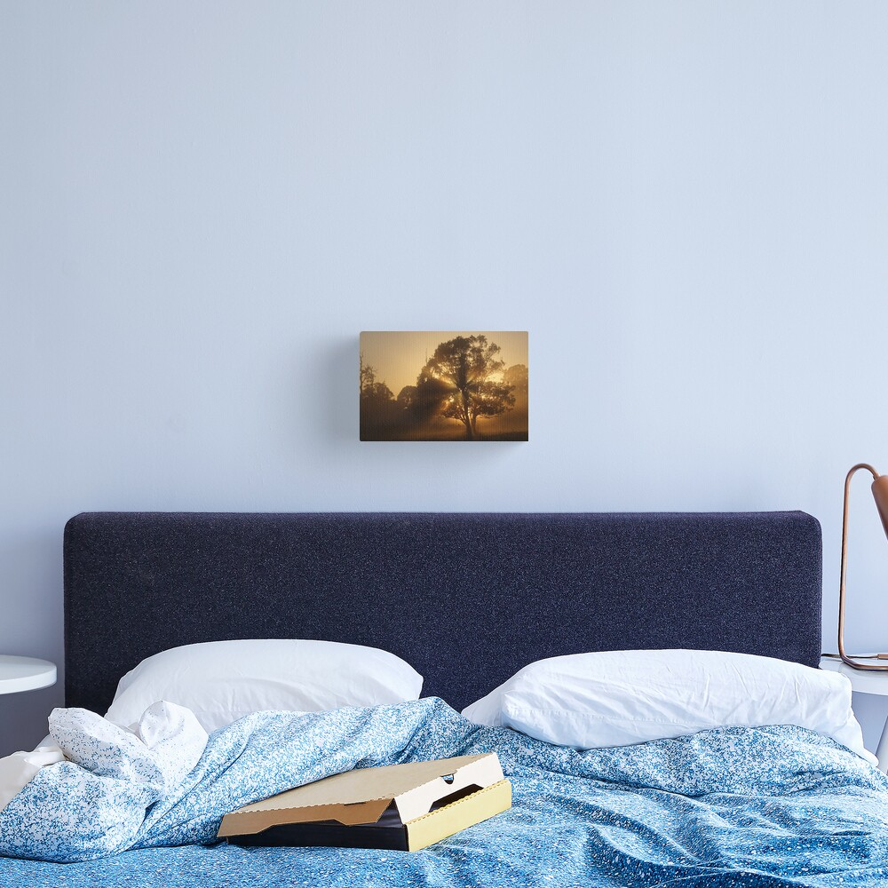Morning Gold Canvas Print