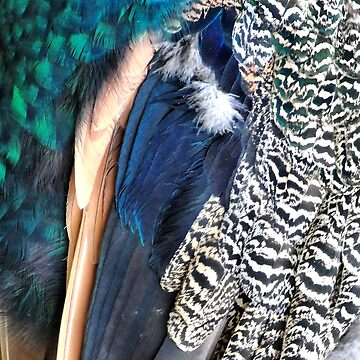 Peacock feathers by chihuahuashower