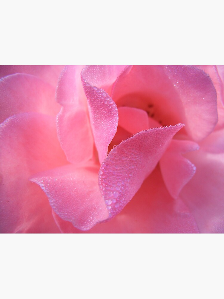Rose by theoddshot