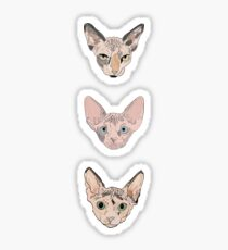 the sphynxes Sticker