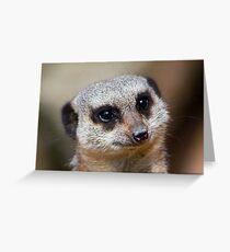 Meerkat Portrait....... Greeting Card