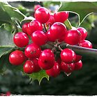Winter Holly by trish725
