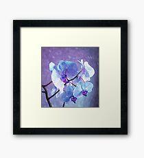 Blue Orchid-Art Prints-Mugs,Cases,Duvets,T Shirts,Stickers,etc Framed Print
