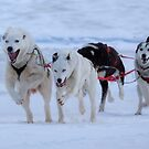 Power Dogs! by James Anderson