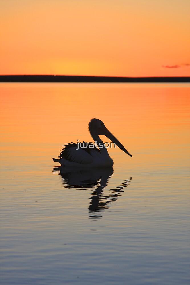 Pelican Sunset, Shark Bay by jwatson