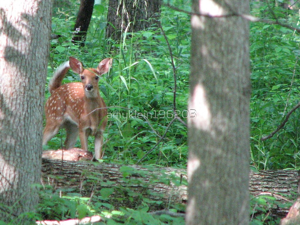 Spotted Baby Deer by amyklein196203