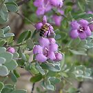 Bee in the Texas Sage by Cathy Jones