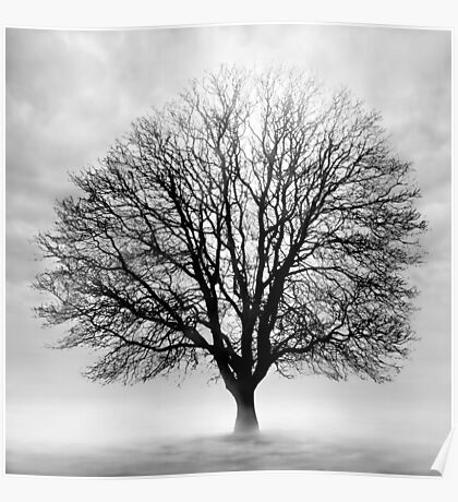 Silent Tree Poster