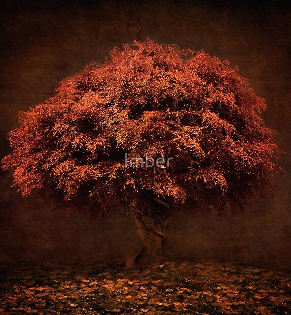 The Tree that knew me by Imber