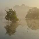 Pen Ponds, Richmond Park, London by Kasia Nowak
