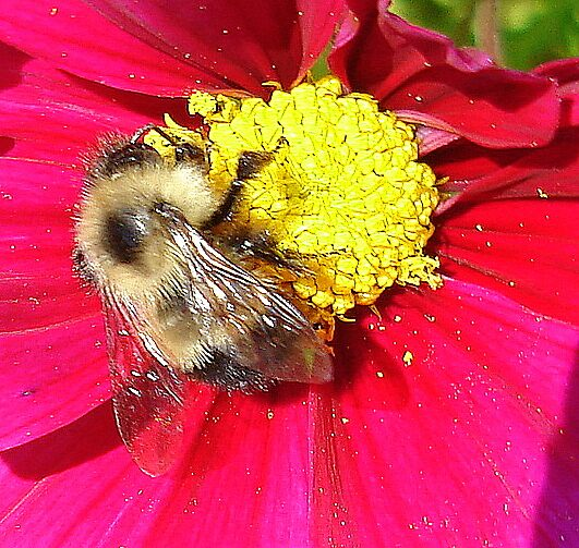 Storing pollen for winter by Doreen