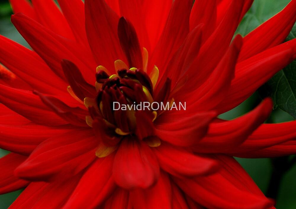 Devils Fire by DavidROMAN